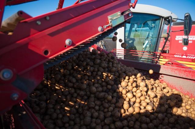 fermierii-lays-recoltarea-a-doua-zi-low-res-91_resize