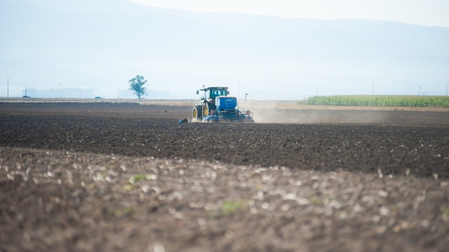 fermierii-lays-recoltarea-a-doua-zi-low-res-97_resize