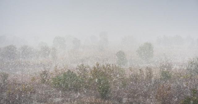 prima-ninsoare-in-bucuresti-24