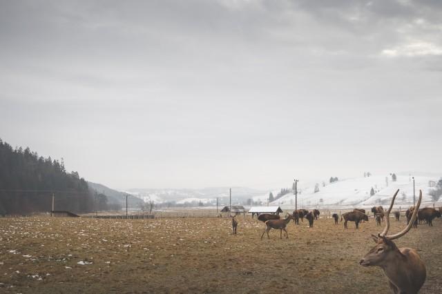 goodyear-winter-ziua-1-13