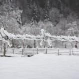 goodyear-winter-ziua-1-42