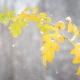 goodyear-winter-ziua-3-21
