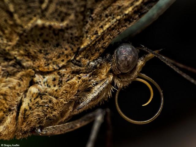 fluture-din-perspectiva-macro-2-6
