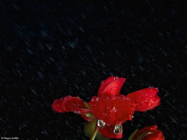 puterea-unei-flori-9
