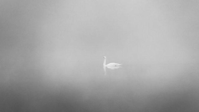La ieșirea din București spre Brănești sunt niște lacuri minunate. Dimineața, înainte de răsărit, în ceață, poți vedea chiar și câteva dintre lebedele care au cuib aici.