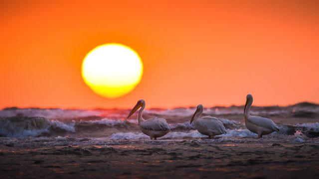 Fotografii din Delta Dunării 125